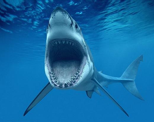 Cá mập không bao giờ nuốt chửng người. (Ảnh: Internet)