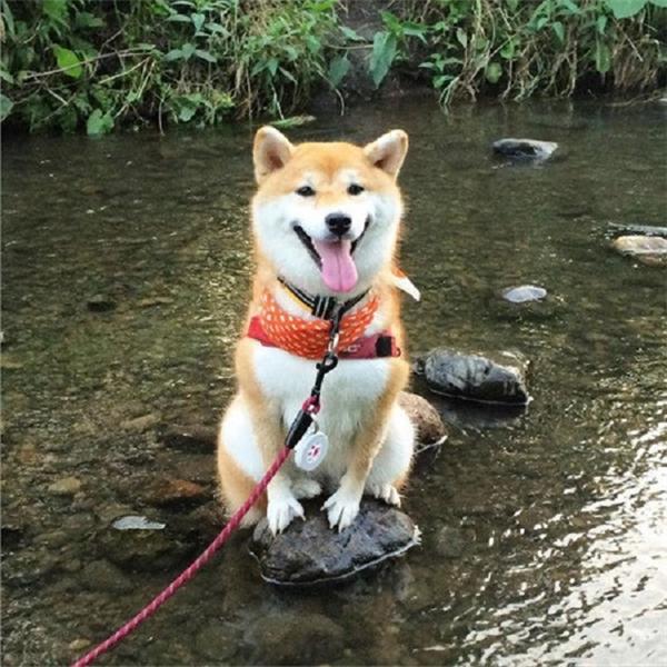 Cố gắng chỉ bước đi trên các hòn đá để không bị ướt chân. Rồi khi không còn hòn đá nào nữa, nó bị kẹt giữa hồ và không biết phải làm sao nữa.