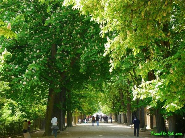 39. Có hơn 470.000 cây xanh ở Paris! (Ảnh: Internet)