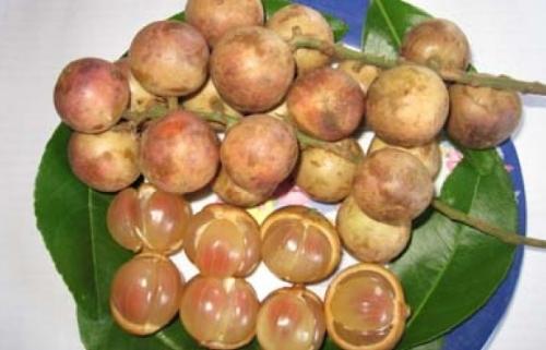 Mỗi lần ăn dâu da là mỗi lần hồi hộp, có quả ngọt lịm lại có quả chua lè. (Ảnh: Internet)