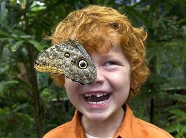 Mắt bướm.(Ảnh: Reddit)