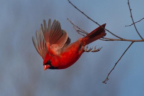 Một loài chim xinh đẹp của thiên nhiên. (Ảnh: Internet)