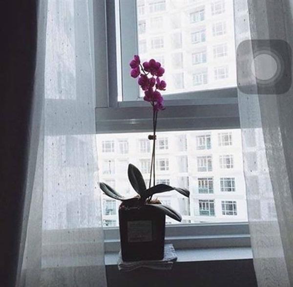 Khi quen Cường Đôla, món quà Hạ Vi nhận được thường xuyên nhất từ vị đại gia phố núi này không phải là cácvật phẩm xa xỉ, mà lại chính là những bó hoa. - Tin sao Viet - Tin tuc sao Viet - Scandal sao Viet - Tin tuc cua Sao - Tin cua Sao