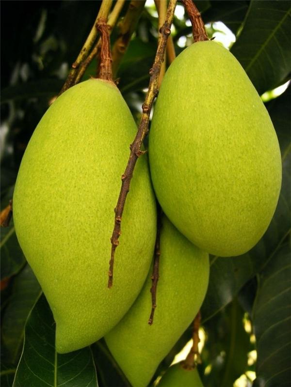 Miệt vườn Cái Bè sở hữu nhiều loại trái cây phong phú.(Ảnh: Internet)