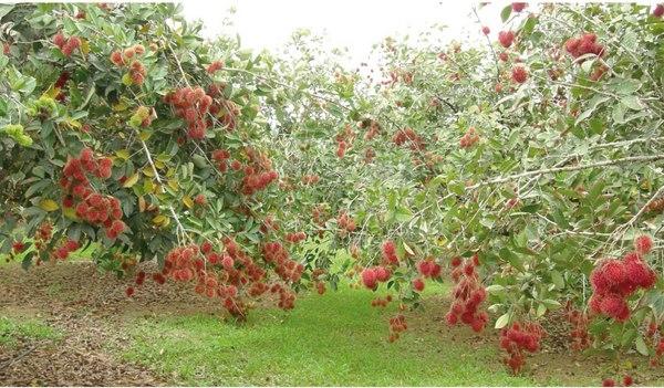 Lạc vào xứ sở trái cây Vĩnh Kim.(Ảnh: Internet)