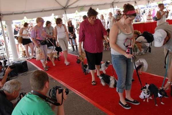 Năm 2007, Jill Kobe đã lập kỉ lục thế giới khi chủ trì đám cưới cho 178 đôi chó. Tất cả những chú chó đều gặp gỡ chớp nhoáng trong một buổi hẹn hò trước khi kết hôn. (Ảnh: Internet)