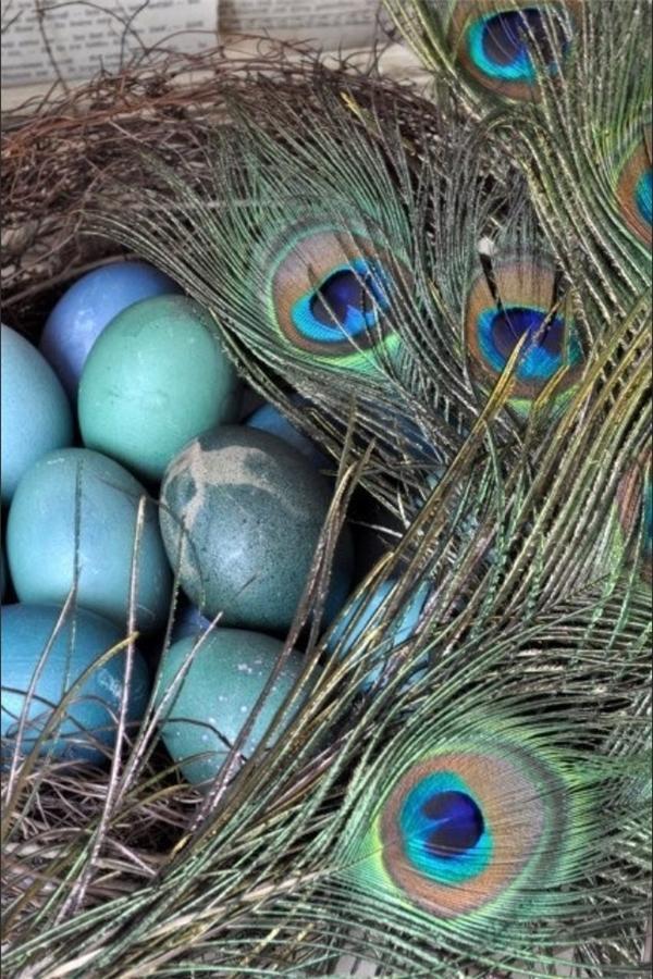 Trứng công có màu xanh độc đáo. (Ảnh: Internet)
