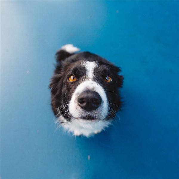 Chú chó đáng yêu này có tên là Momo.