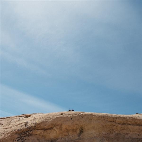 Chú chó rảnh nhất thế giới: Đi trốn rồi bắt chủ đi tìm mỗi ngày
