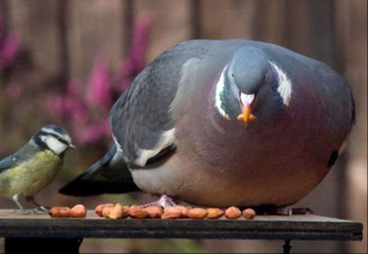 Mày giành ăn với anh hả? Có tin anh nuốt chửng nổi mày không?