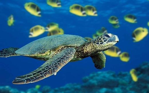 Những quả trứng lạ thực ra là trứng của loài rùa biển quý hiếm. (Ảnh: Internet)