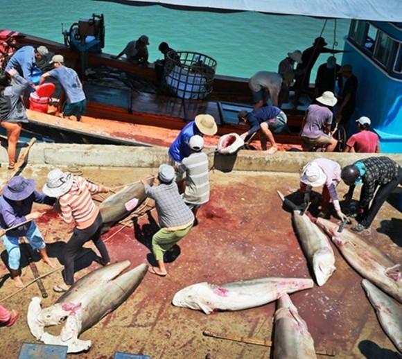 Cơ cực đời phụ nữ oằn lưng vác... cá mập trên vai