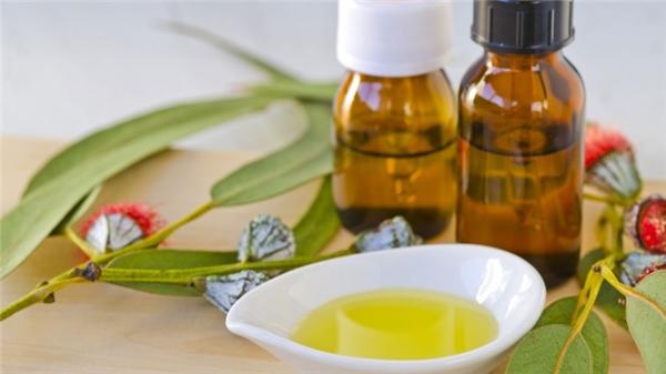 Tinh dầu bạch đàn chứa chất chống viêm. (Ảnh: Internet)