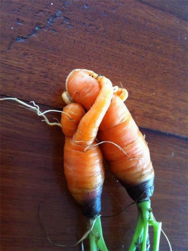 """Cặp đôi tròn tròn, nhỏ nhỏ này tình thương mến thương hen. Ngay cả cà rốt cũng """"có tình cảm"""" mà. (Ảnh: Upcoming)"""