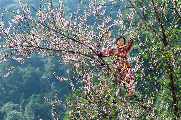 Du lịch Mộc Châu - 4 mùa hoa đẹp không thể cưỡng nổi ở Mộc Châu