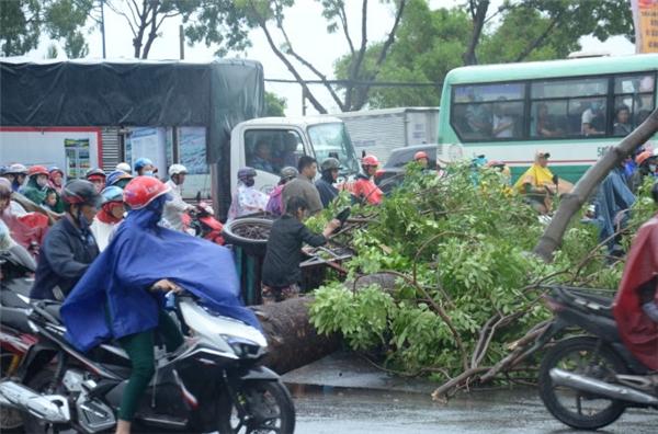 Cây xanh bật gốc ở đường Trường Chinh, đoạn trước bến xe Tân Phú. (Ảnh: U.TR)