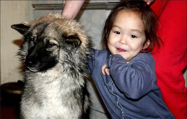 Kì tích: Chú chó làm người hùng cứu sống cô bé 3 tuổi