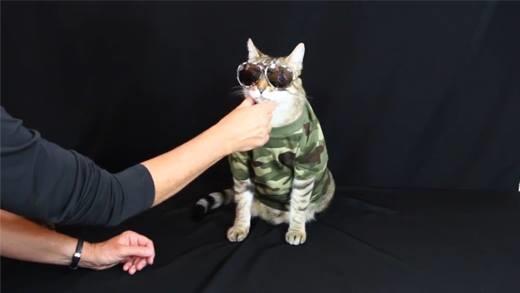 Phát hờn với siêu mẫu mèo