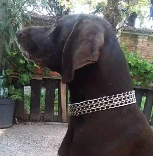 Mẹ chả hiểu thời trang kiểu gì nhìn giống vòng cổ của em cún nhà mình.