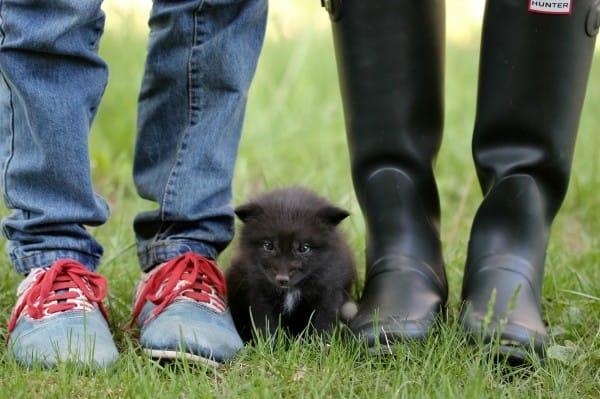 Ban đầu ai cũng cho rằng đây là một chú chó nhỏ.