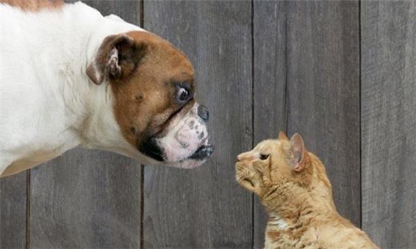 Có ngon thì nhào vô đây. Chưa biết mèo nào cắn mỉu nào đâu.