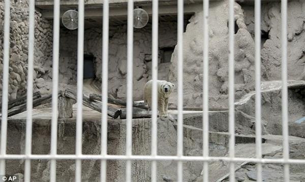 Môi trường nuôi nhốt của Arturo ở Sở thú Mendoza