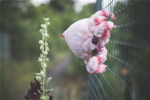 Khi những con vật đáng sợ biến thành bông sẽ