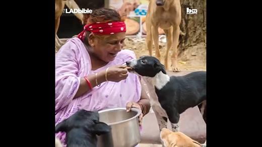 Cảm động cụ bà một mình nuôi hơn 400 con chó hoang
