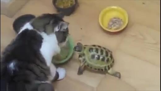 Những chú rùa