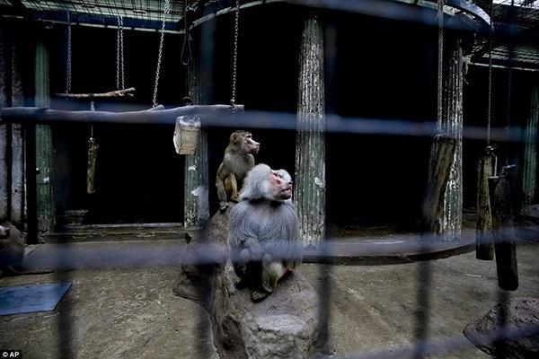Hình ảnh những con thú còn bị nhốt trong chuồng thế này sẽ dần dần biến mất.