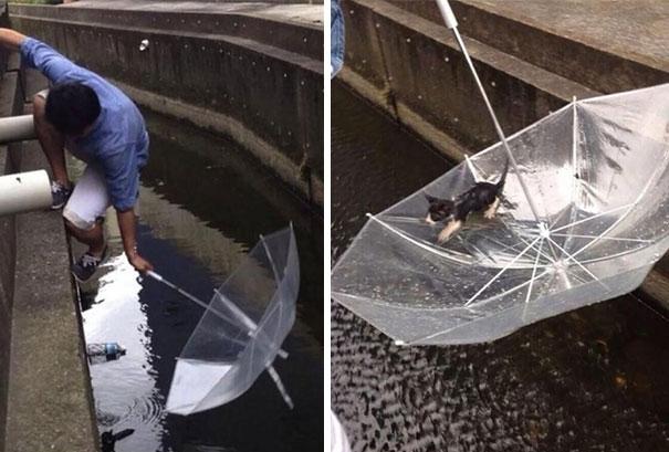 Một người đàn ông dùng ô để cứu một chú mèo bị rớt xuống nước.