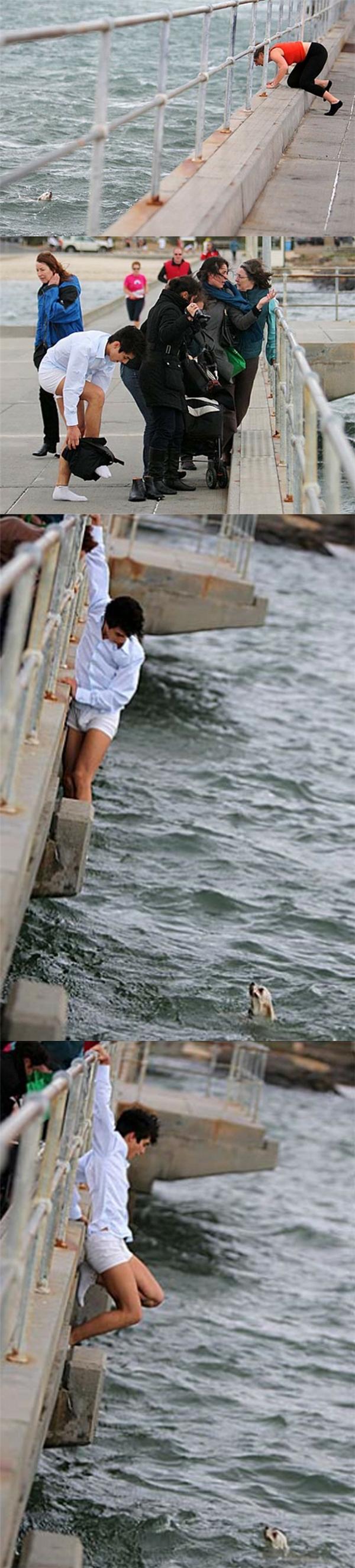 Sau khi thấy chú chó của một người lạ mặt bị lọt xuống nước khi đang đi dạo trên một bến tàu ở Melbourne, một chàng trai liền nhảy xuống vớt nó lên hộ bà.