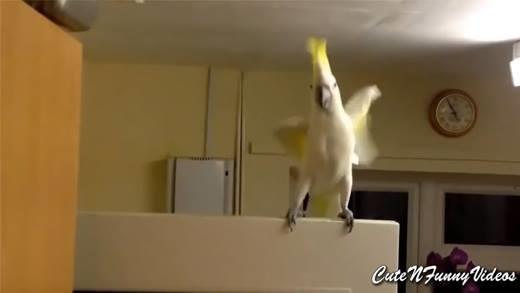 Chết cười với những con vẹt gây sốt cộng đồng mạng gần đây