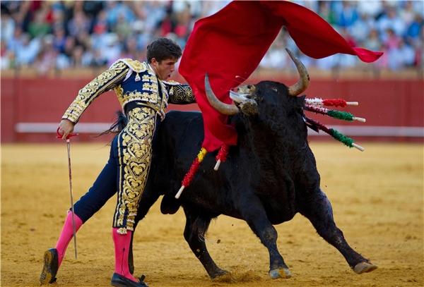 Đấu bò từ lâu đã thành một phần văn hóa của Tây Ban Nha. (Ảnh: Internet)