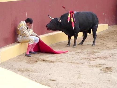 Bức tranh làm lay động cả thế giới: người đấu sĩ gục ngã và ôm mặt khóc, không nỡ ra tay giết chú bò tót.(Ảnh: Internet)