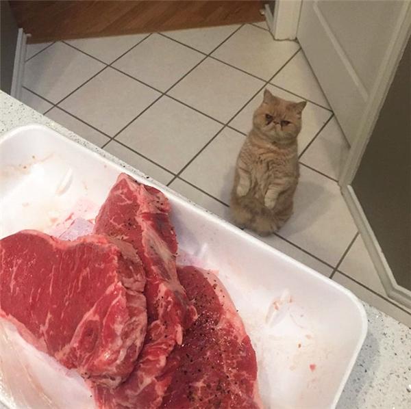 """""""Ngồi chờ mòn mỏi từ sáng đến giờ mà chỗ thịt đấy vẫn còn sống nhăn là sao hả?"""""""