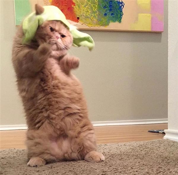 """""""Không được sỉ nhục mèo bá chủ bằng cách đội cái thứ kìcục này lên đầu ông!"""""""