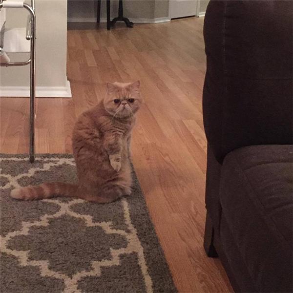 """""""Cái gì? Con mèo nhà bên vừa """"tàn đời trai""""hả? Loài người các ngươi ác quá mà."""""""