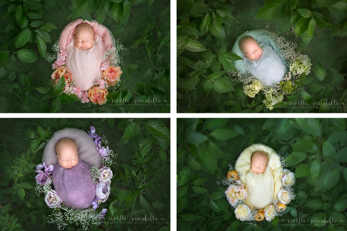 Rất khó để phân biệt vì bốn bé đều giống nhau như những giọt nước.