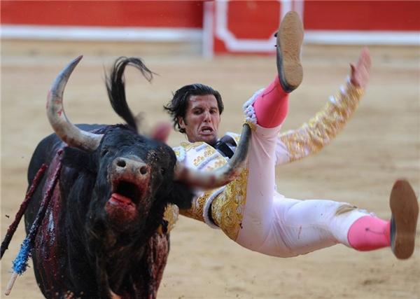 Suýt chút nữa cặp sừng nhọn hoắc kia đã cắm phập vào chân của đấu sĩ. (Ảnh: Internet)