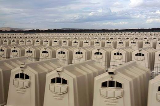 Bức ảnh gây chấn động mạng xã hội vì đã phanh phui thực trạng chăn nuôi bò sữa ở Oregon. (Ảnh: Diane Scarazzini)
