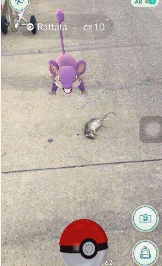 Chú Pokemon chuột này trông dáng vẻ như đang muốn bảo vệ đồng loại của mình đang nằm... chết thẳng cẳng trên đường.