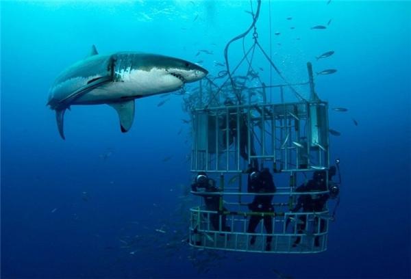 Từ năm 2002, quần đảo Neptune là nơi duy nhất ở Australia cho phép lặn xuống biển ngắm cá mập trắng. Du khách đến đây phải tuyệt đối tuân thủ quy định về an toàn, không thò tay chân ra ngoài lồng sắt nếu không muốn làm mồi cho cá mập.