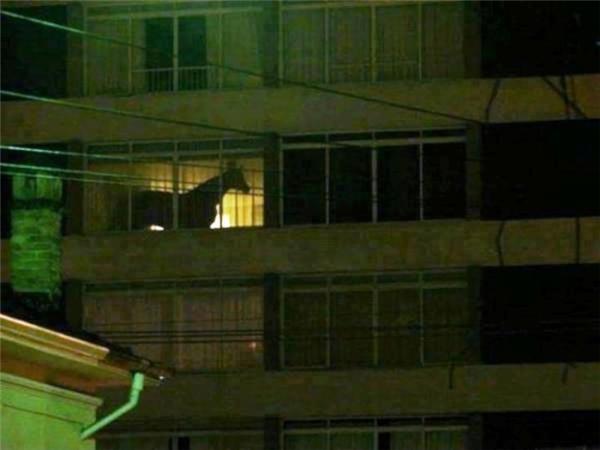 Có phải là con ngựa trong căn hộ không? Làm sao nó lên được đó?! Hẳn là bằng cầu thang hoặc thang máy rồi.