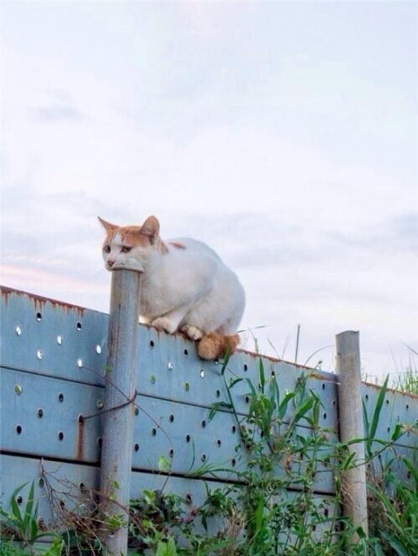 Chú mèo này hẳn là đang rất đói bụng nên mới không tha cả chiếc ống sắt này.
