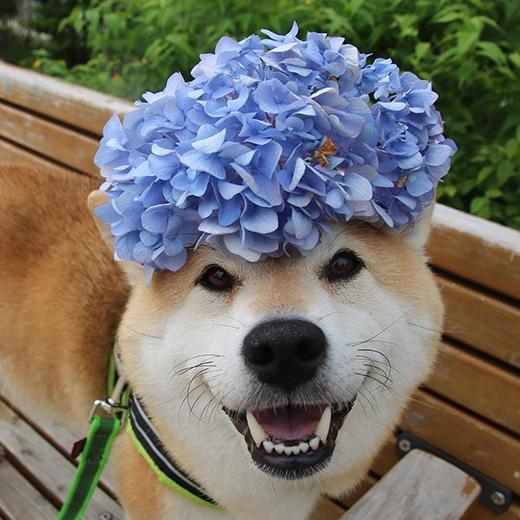 """Cô nàng cũng không ngại """"đọ sắc"""" với hoa để chứng minh Uni đẹp hơn hoa."""