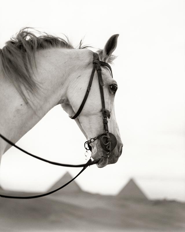 Sự thật đằng sau hình ảnh khỏe khoắn của các chú ngựa trên poster, kênh truyền hình không vốn không như chúng ta nghĩ.