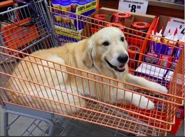 Mỗi lần đi siêu thị với mẹ, tui cứ lấy những thứ tui thích cho vào xe đẩy và lạy trời mẹ tui đừng phát hiện ra. (Ảnh: Internet)