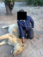 Một con sư tử bị dân du mục giết chết để trả thù. (Ảnh: internet)