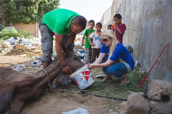 Hội cứu trợ động vật đã phải nỗ lực rất nhiều để cứu sống những con vật tội nghiệp này.